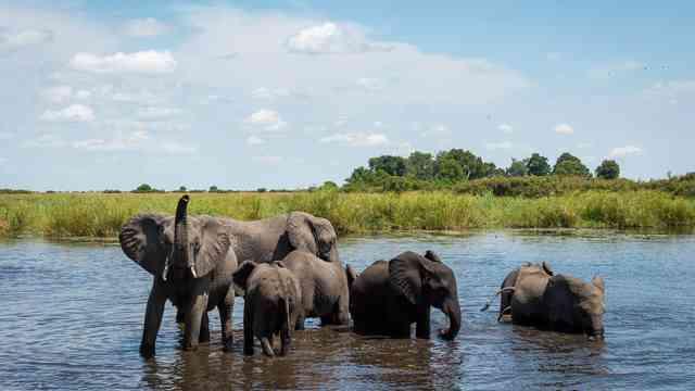 Botswana Wildlife Elephant